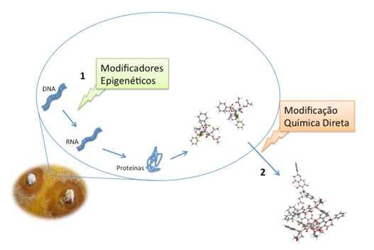 projeto-fungos
